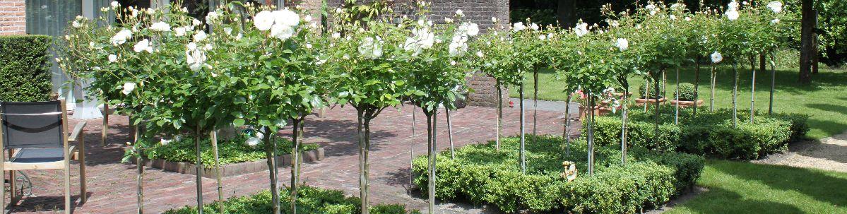 Hovenier Roosendaal